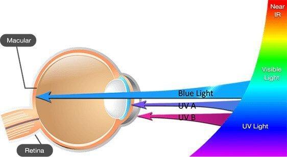 Blue Light damage to the eye